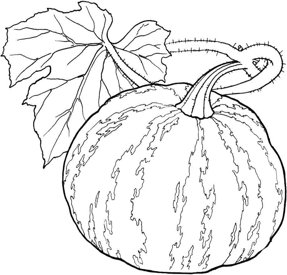 Coloring Pumpkin and leaf. Category Vegetables. Tags:  pumpkin, leaf.