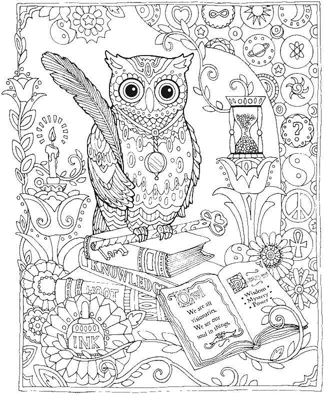 Coloring sheet birds Download .  Print