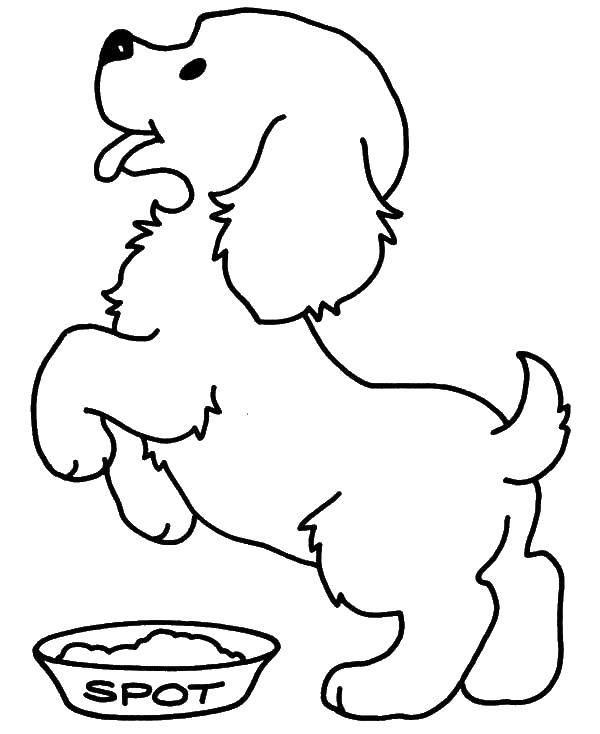 Coloring sheet Pets Download religion, China.  Print ,Religion,