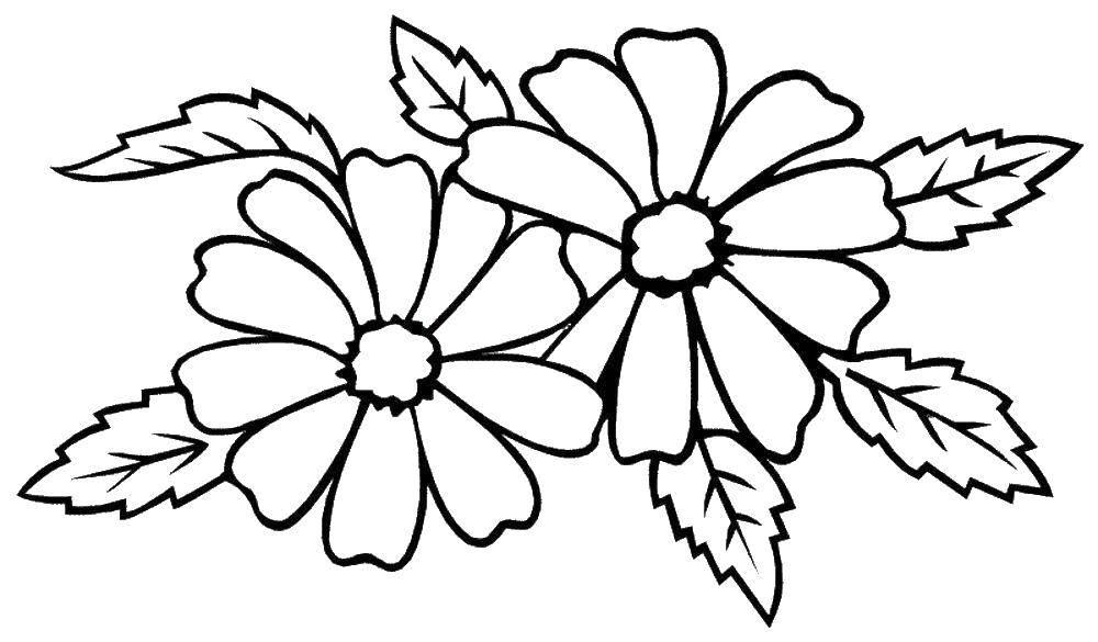 праздник картинки цветов на белом фоне для раскрашивания муниципальное образование шлиссельбургское