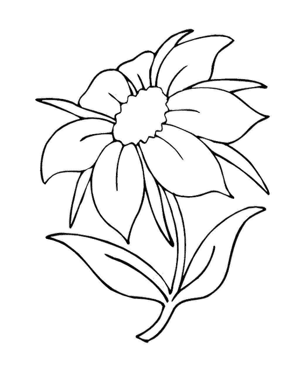 картинки раскраски цветы крупные шаблоны