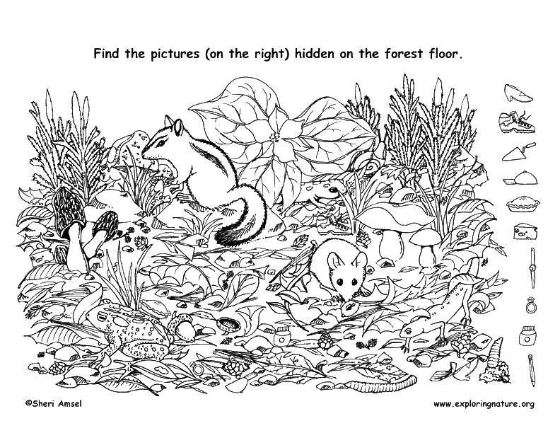 Раскраска Найди предметы Скачать кролики, горка, бассейн, купальники.  Распечатать
