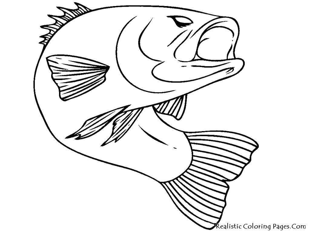 Coloring sheet The contours of the fish to cut Download Leila, Winx,.  Print