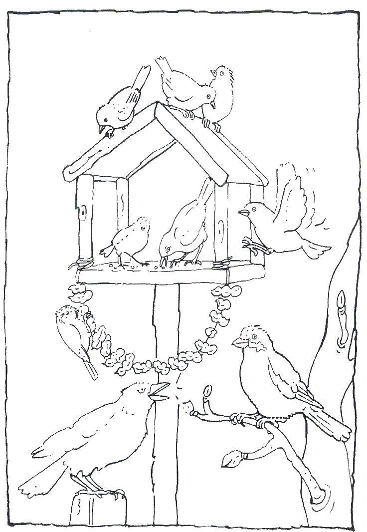 рисунок птицы на кормушке зимой карандашом последующий год дюна