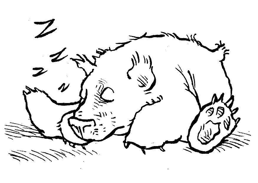 контурная картинка медведя в берлоге великого
