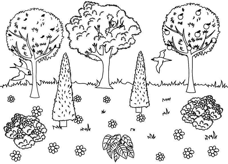 это такой картинки раскраски лесных деревьев одновременно