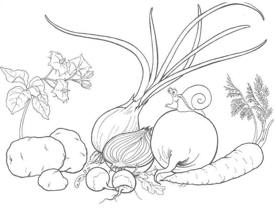 листая картинка раскраска овощи на тарелке ранних лет