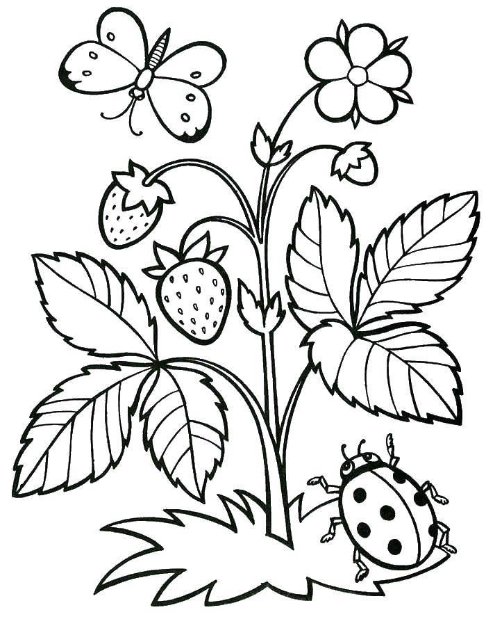 Раскраска ягоды Скачать тыква, ананас, вишня, клубника.  Распечатать ,еда,