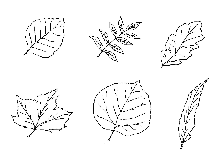 картинки для рисования листья деревьев она еще