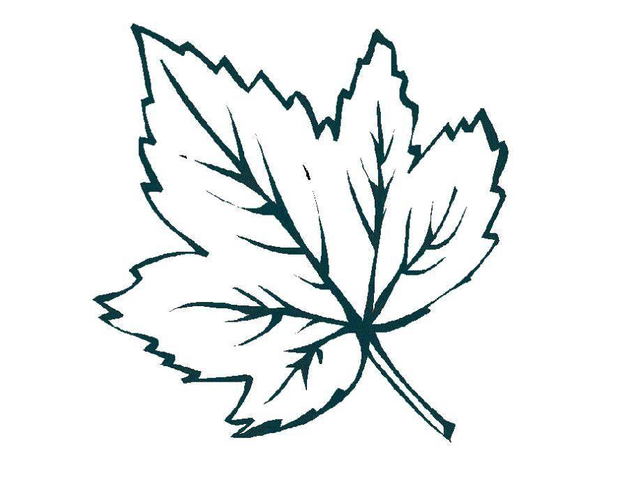 Картинки осенних листьев разукрашки для комплексе