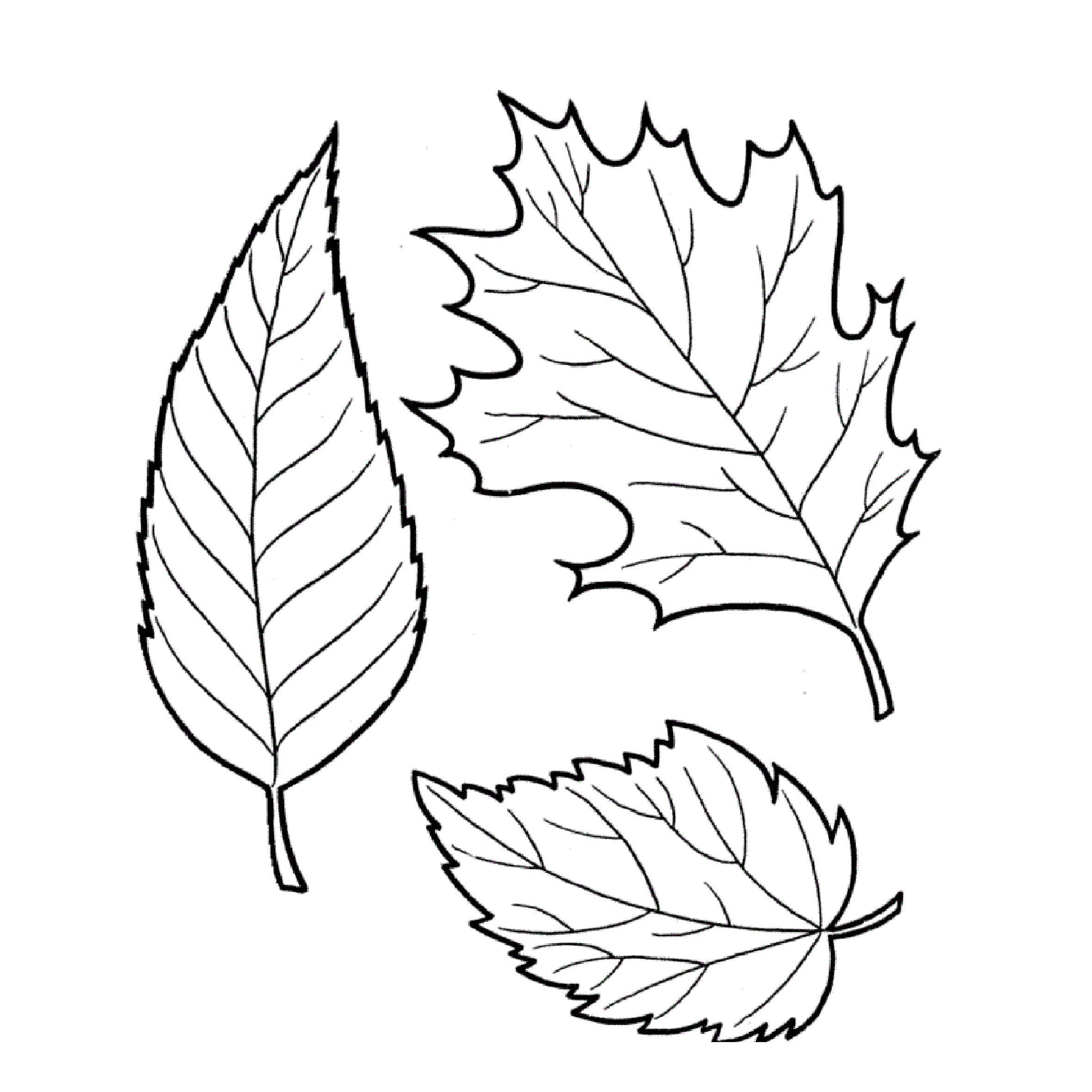 Картинка раскраска для детей листья