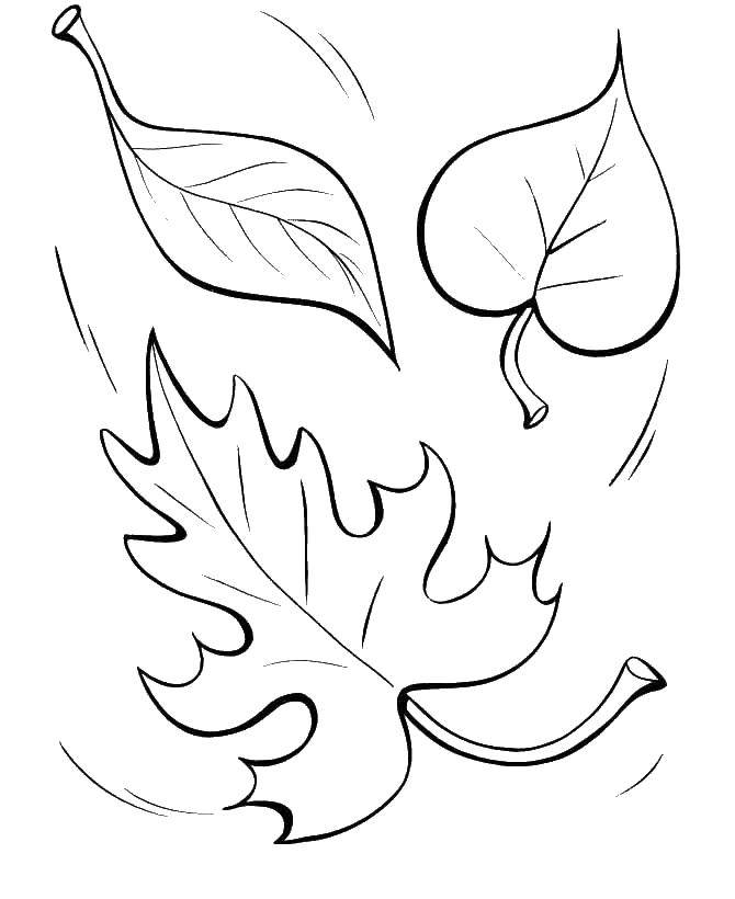 Coloring Leaves. Category The contours of the leaves. Tags:  leaves.