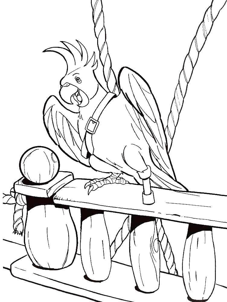 Coloring Parrot pirates Download Pirate, island, treasure, ship, parrot,.  Print
