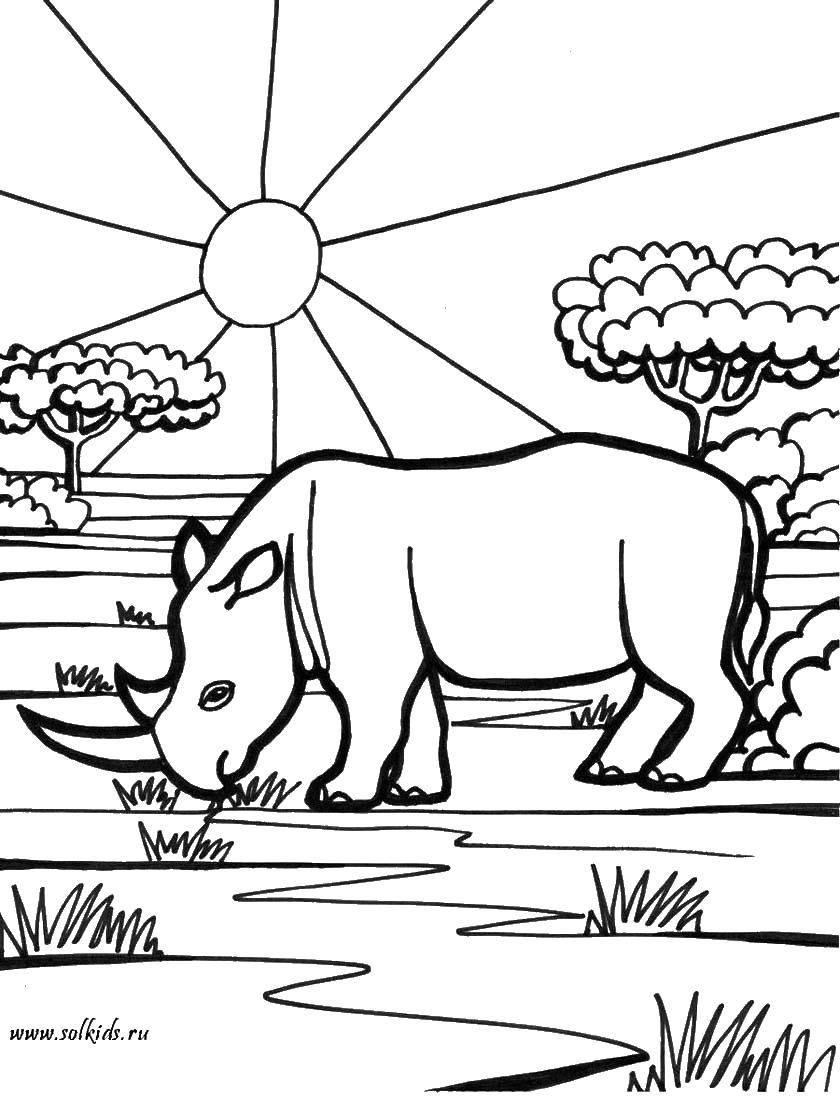 способствует раскраска носорог распечатать этом его