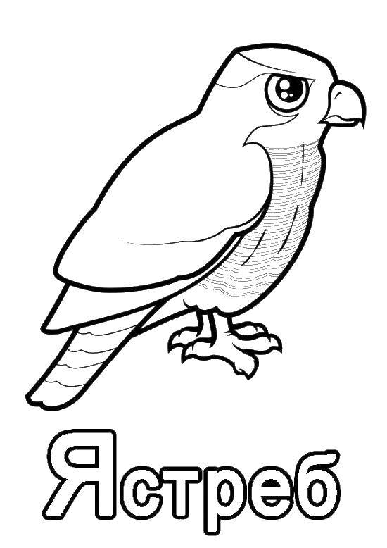 Coloring sheet birds Download Tom , game, cat, Angela.  Print ,coloring,