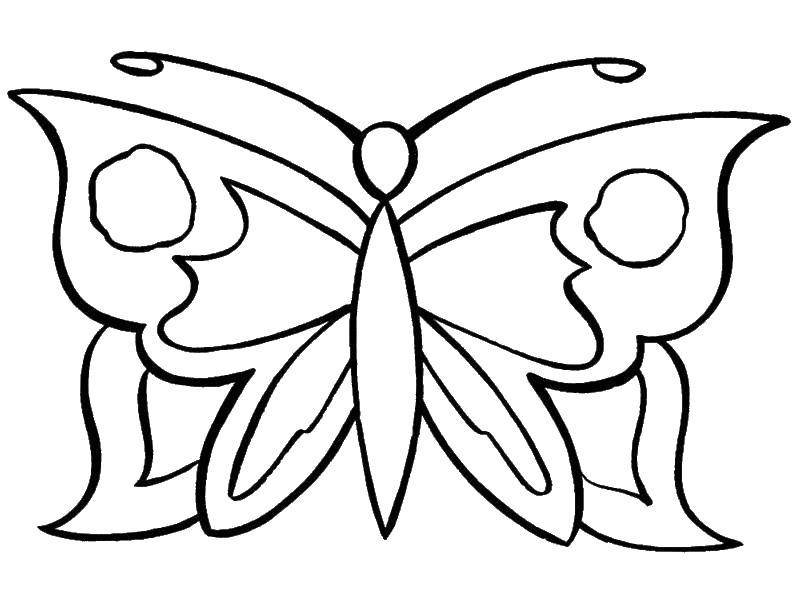 Coloring Butterfly. Category coloring. Tags:  Butterfly.
