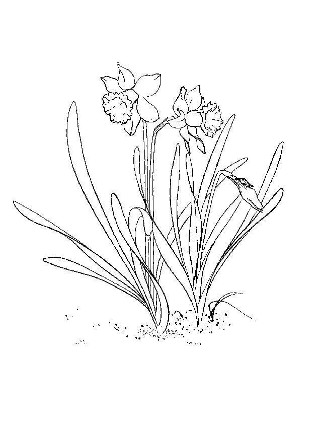 Раскраски Раскраска Верба весна, Раскраски три богатыря на ...