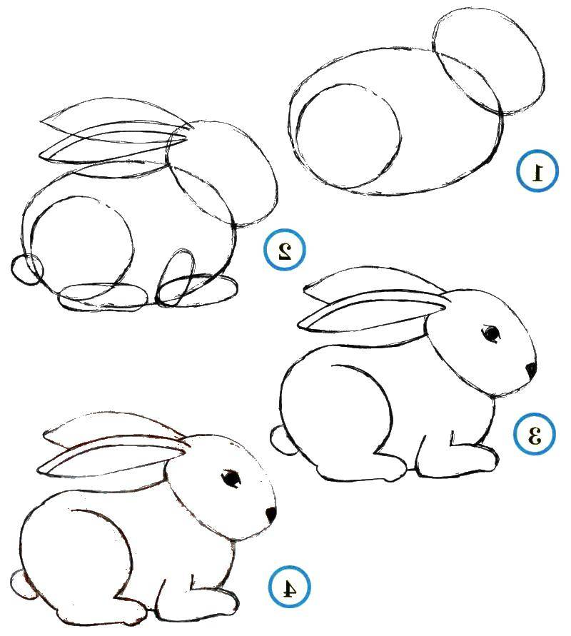 Coloring Gradually draw the Bunny. Category how to draw an animal in stages. Tags:  Animals, Bunny.