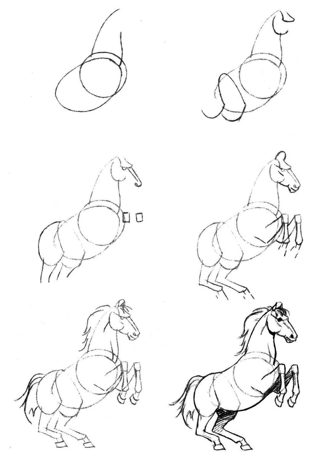 Coloring Gradually draw the horse Download Animals, horse,.  Print