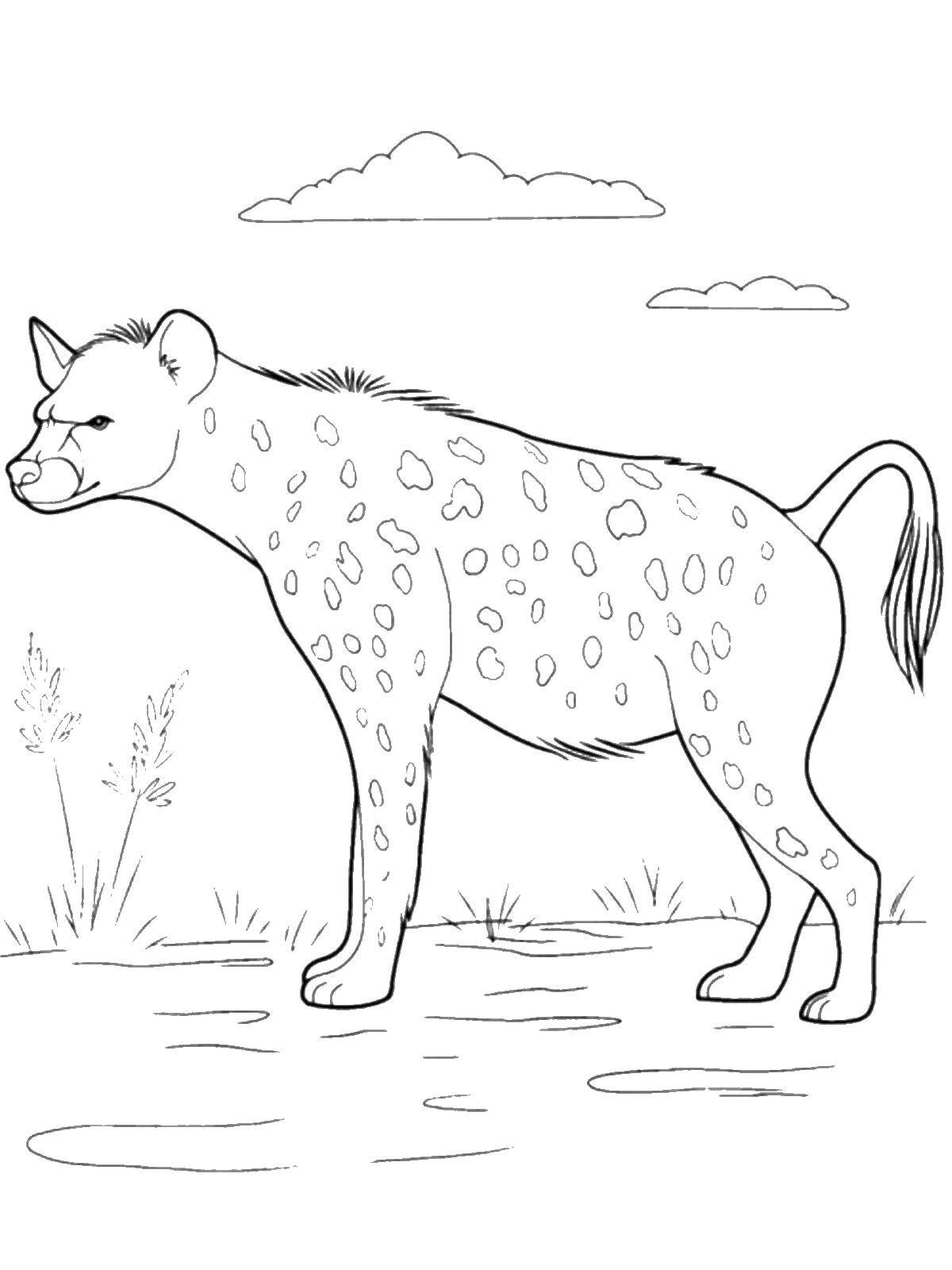 Coloring sheet wild animals Download Animals, horse,.  Print