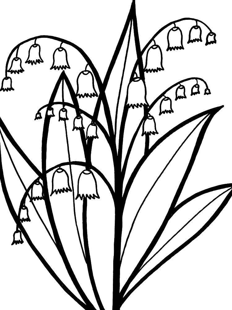 Coloring sheet flowers Download .  Print