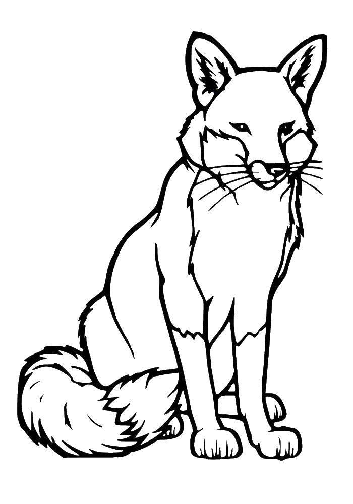 Coloring sheet wild animals Download .  Print