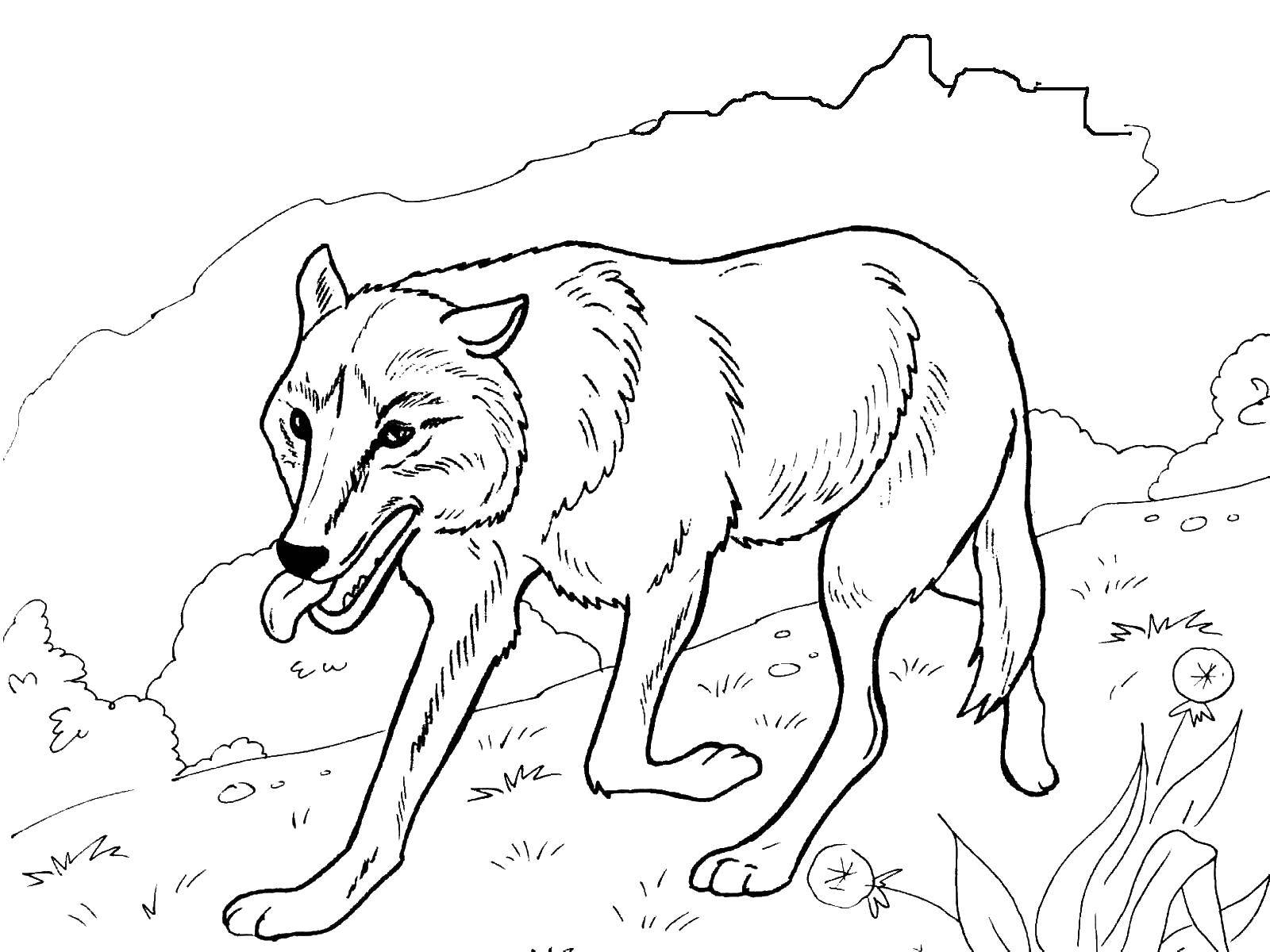 Coloring sheet wild animals Download box,.  Print