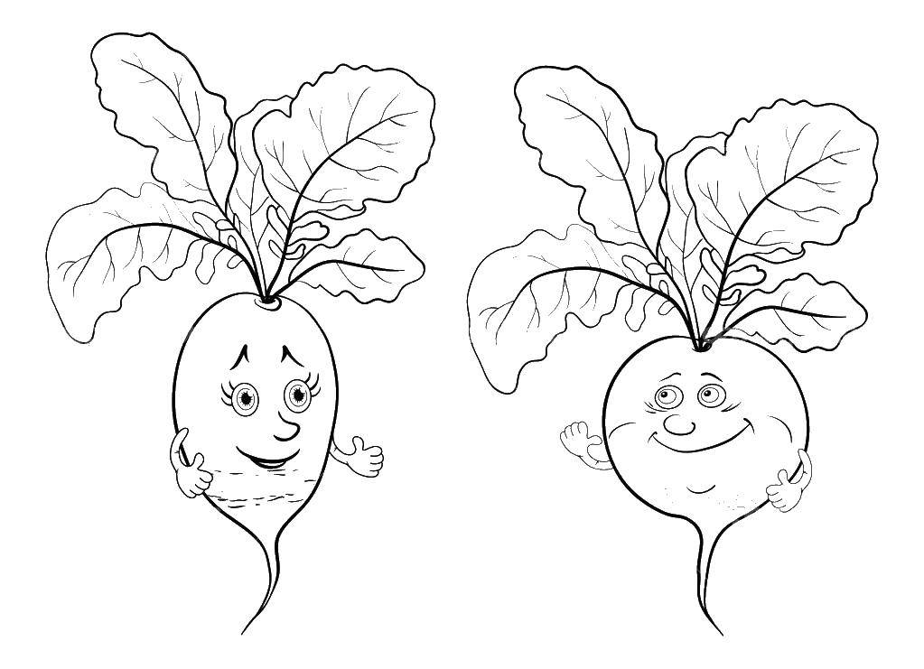 Vegetable Radish Coloring Pages Printable | 741x1023