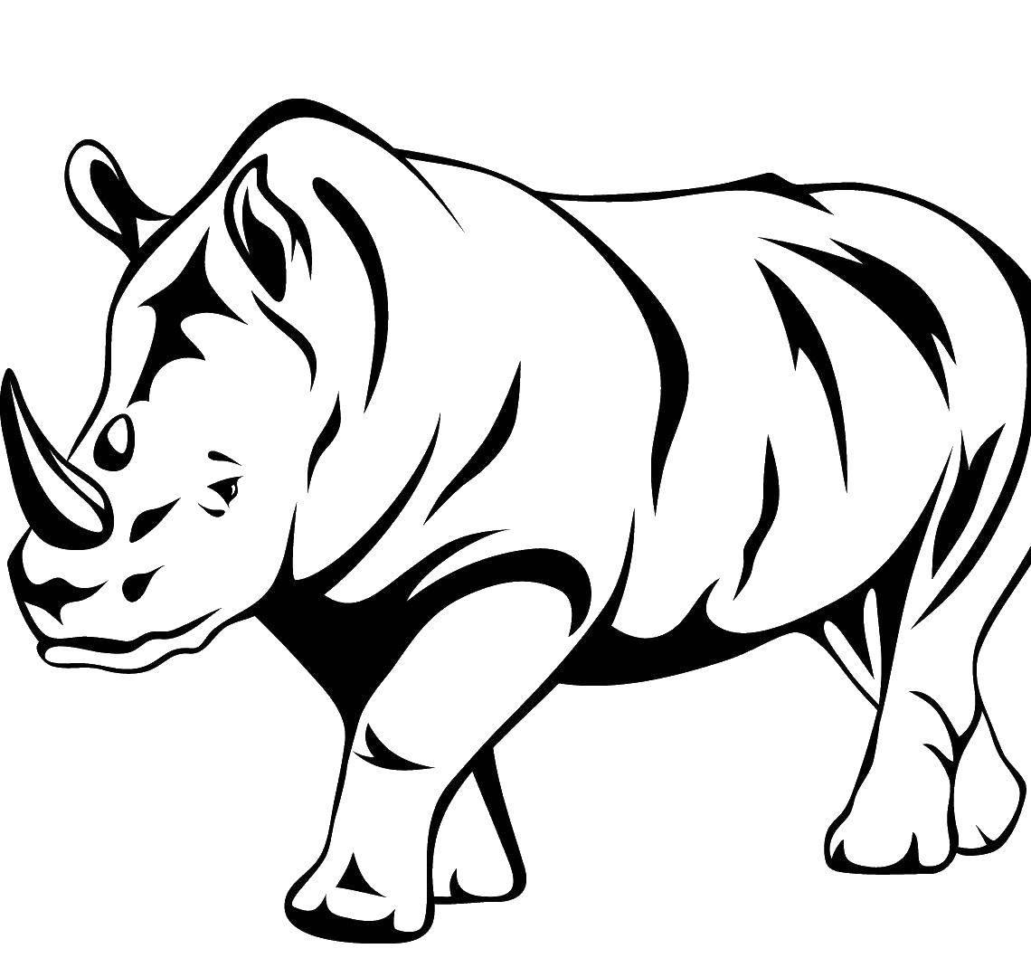 Рисунок животных контур