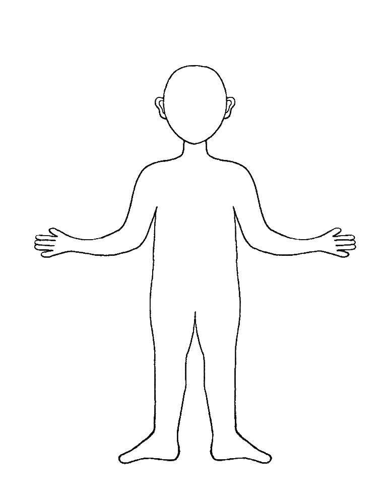 Картинки макет человека для детей