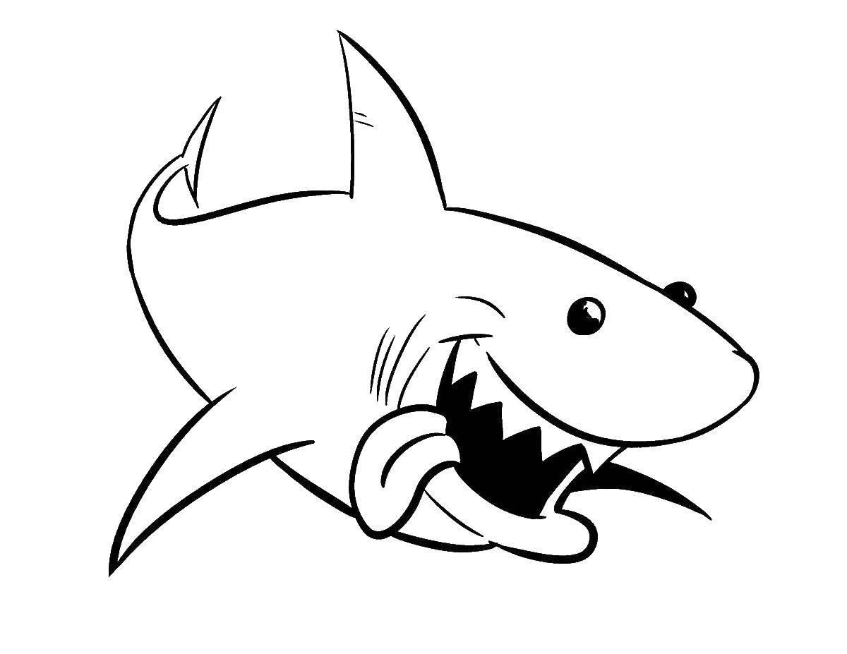 Белая акула картинки для раскрашивания расписание, стоимость