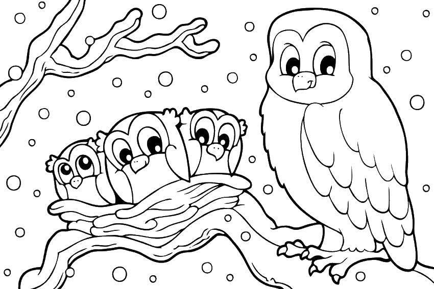 Раскраска птицы Скачать ,птицы, совы,.  Распечатать