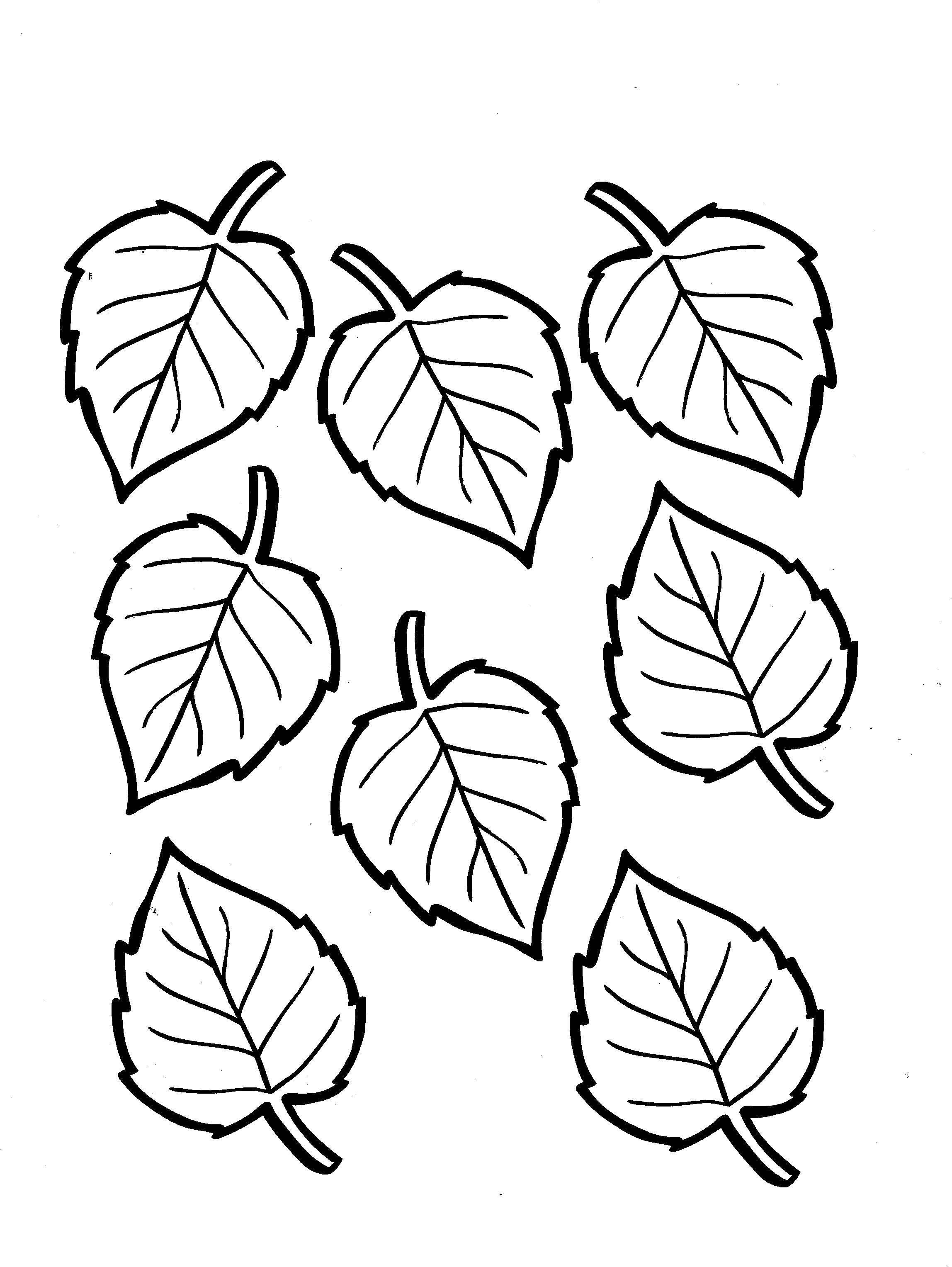 Картинки раскраска листочки от дерева