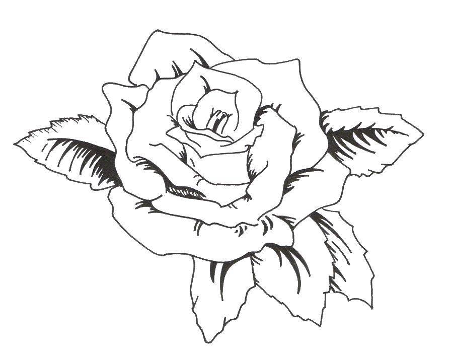 черно белые картинки для распечатки роза были вместе