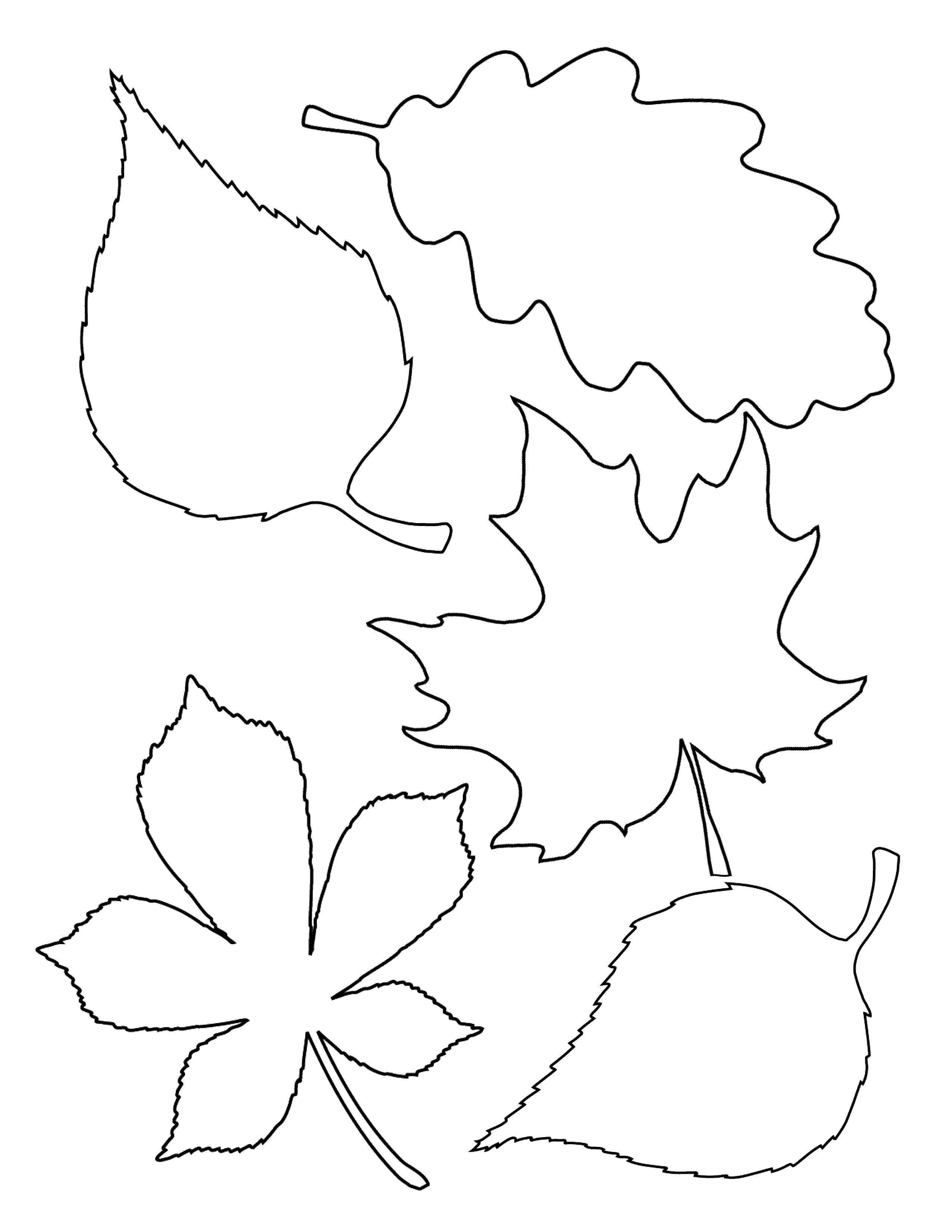 Coloring Leaves Download leaves.  Print ,The contours of the leaves of the trees,