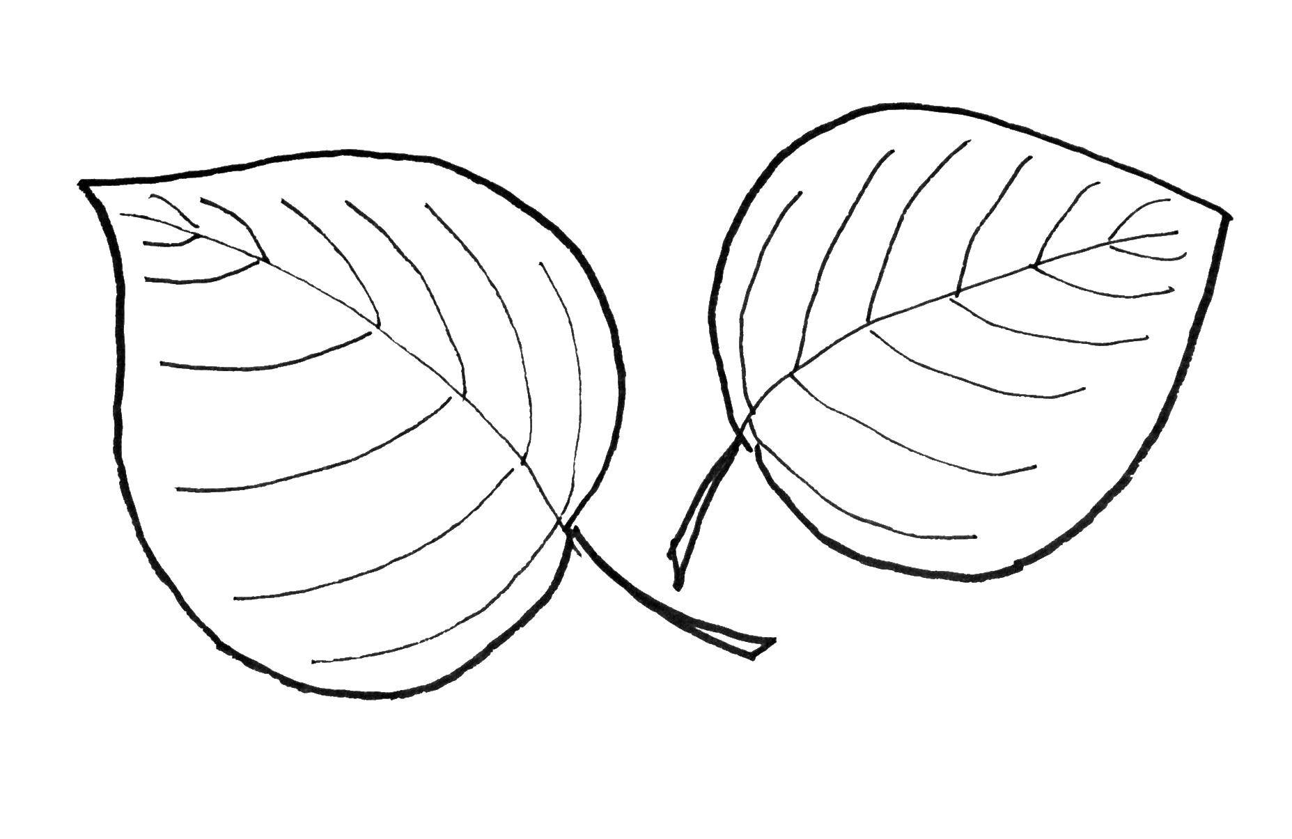 Coloring sheet The contours of the leaves of the trees Download .  Print