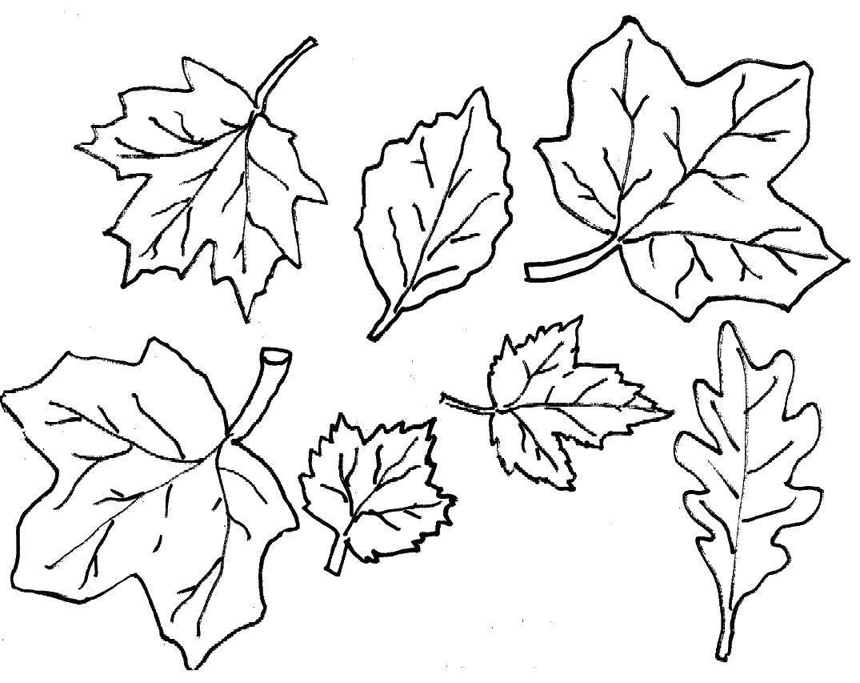 Раскраски без, Раскраска Дерево без листьев Контуры ...