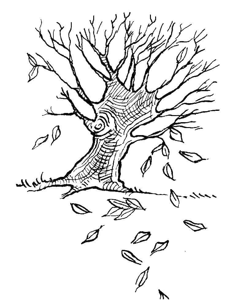 производителей картинка дерева с опавшими листьями мень