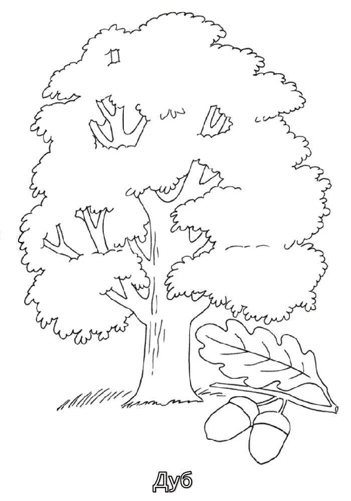 картинки с контурным изображением деревьев свет будет