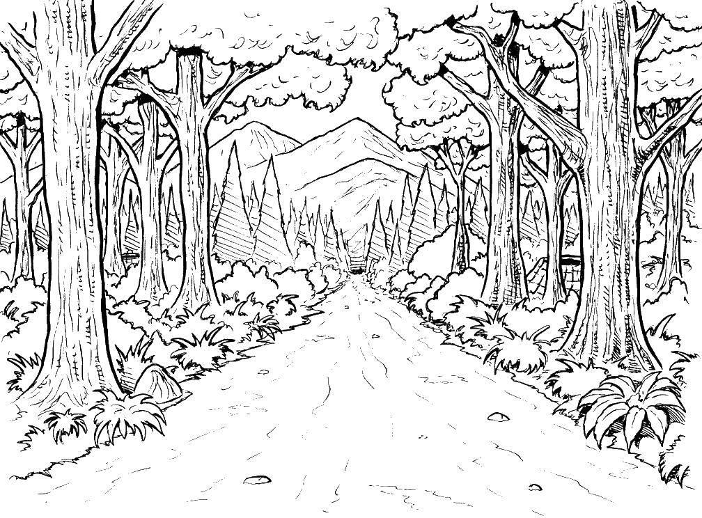 Coloring pages Autumn Скачать .  Распечатать