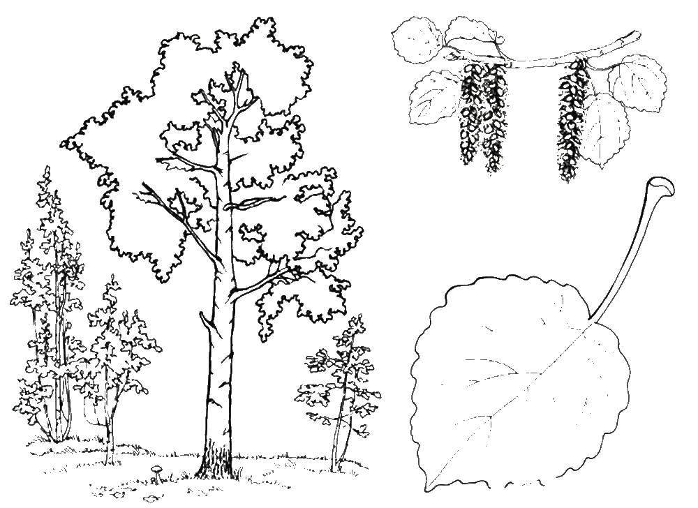 Coloring sheet tree Download dad ,mom,daughter,.  Print