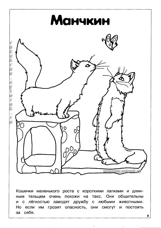 Раскраска породы кошек и собак