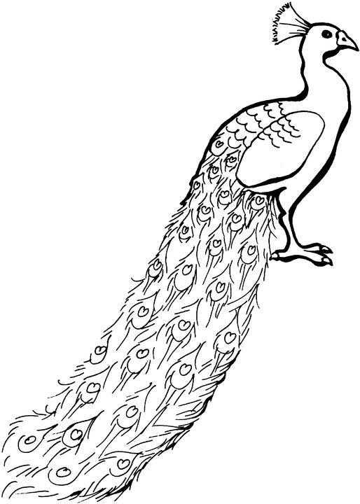 Coloring Peacock with long tail Download peacock, birds.  Print ,The contours for cutting out the birds,