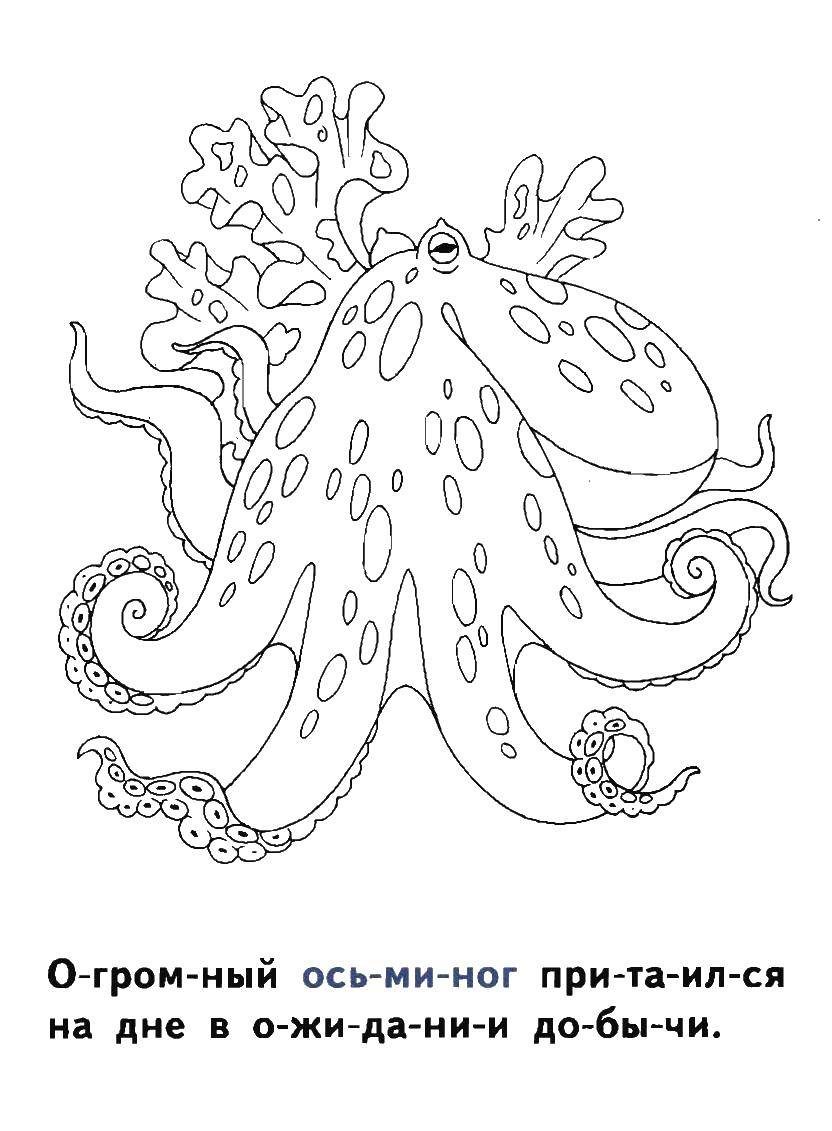 Coloring sheet sea Download animals, APE, monkey, bananas.  Print ,Animals,