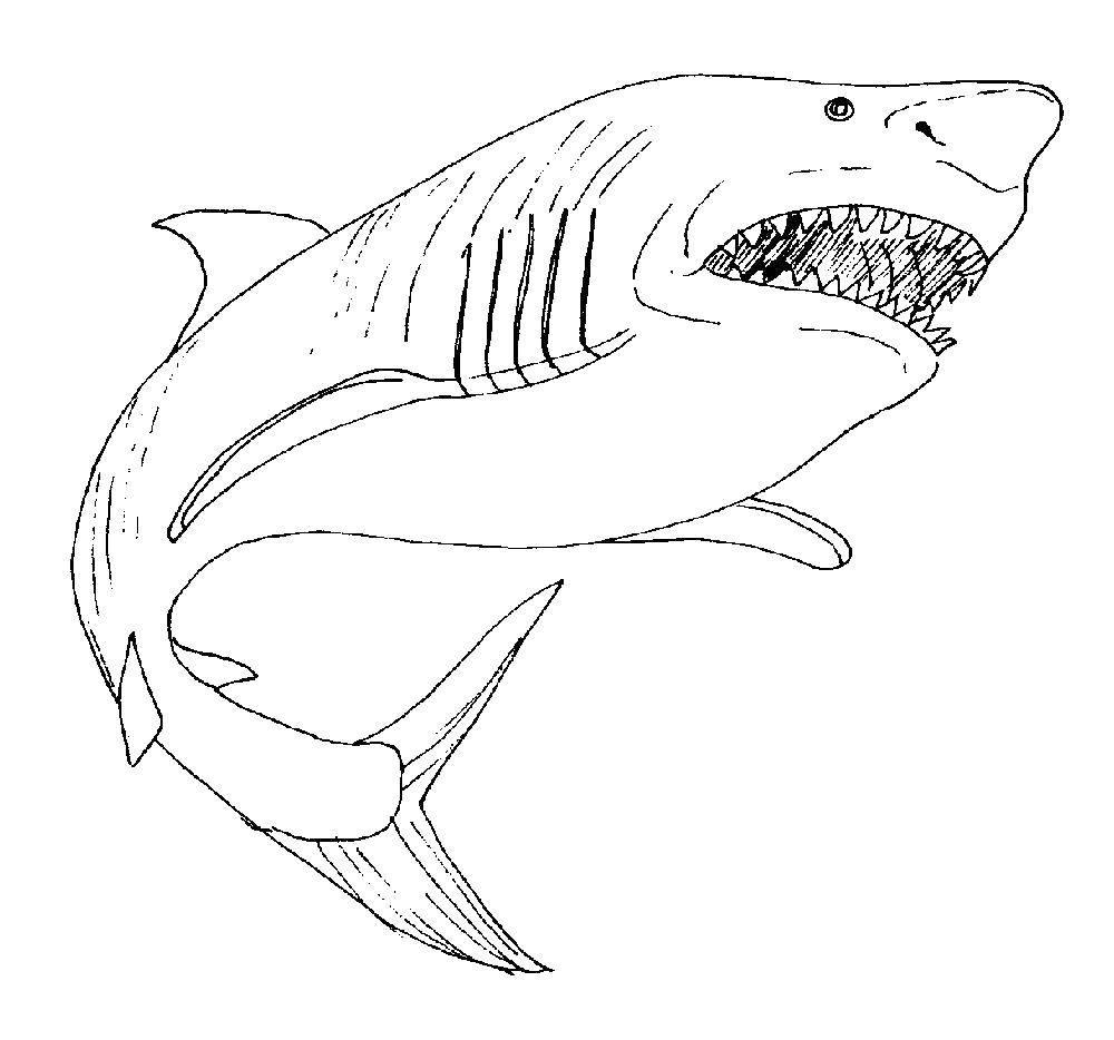 Раскраска Акулы Скачать ,акула,.  Распечатать