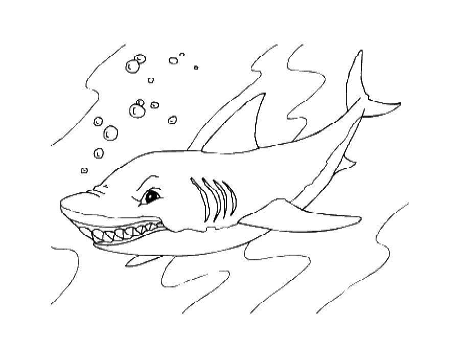 Раскраски дельфины, Раскраска Дельфины напали на акулу Акулы.