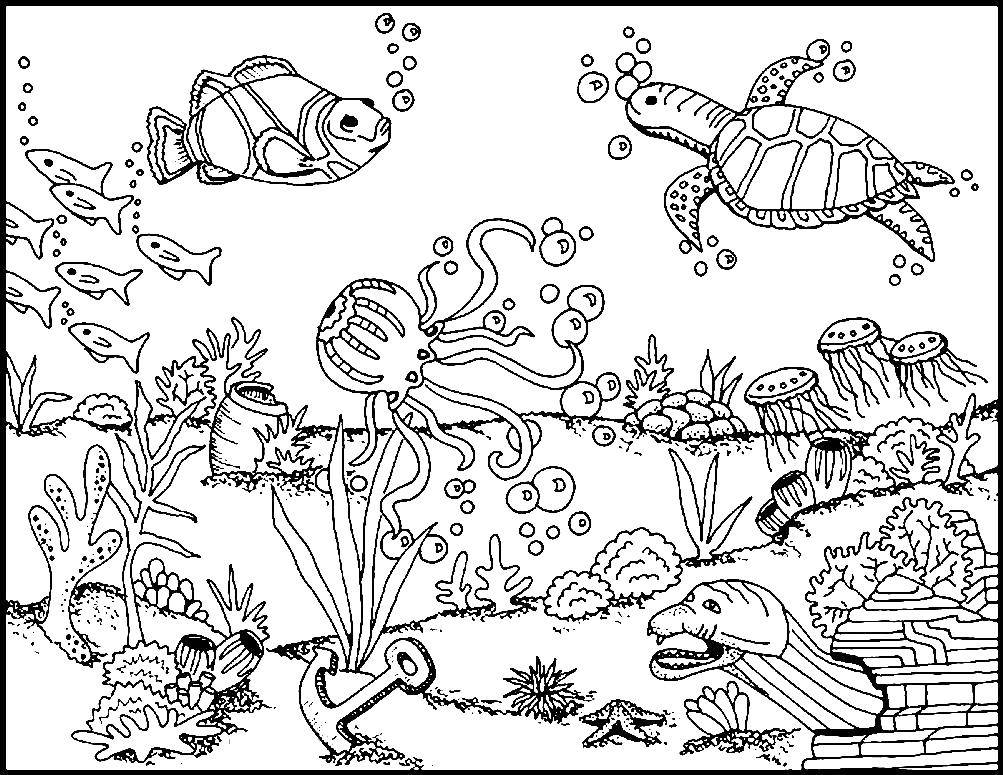 Coloring sheet the bottom of the sea Download the frog, the outline of lagowski.  Print ,The contours of animals,