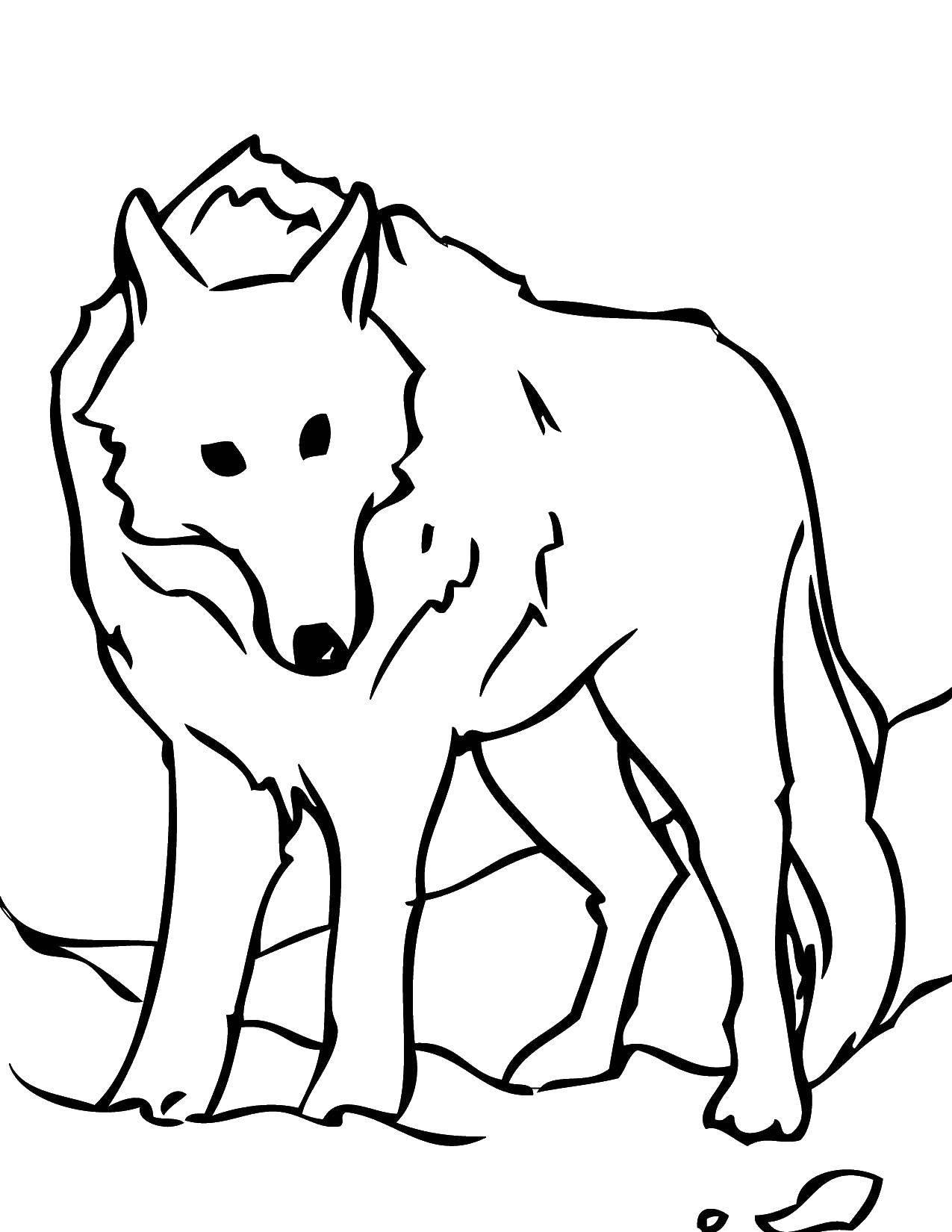 Раскраски Раскраска Волк дикие животные, скачать ...