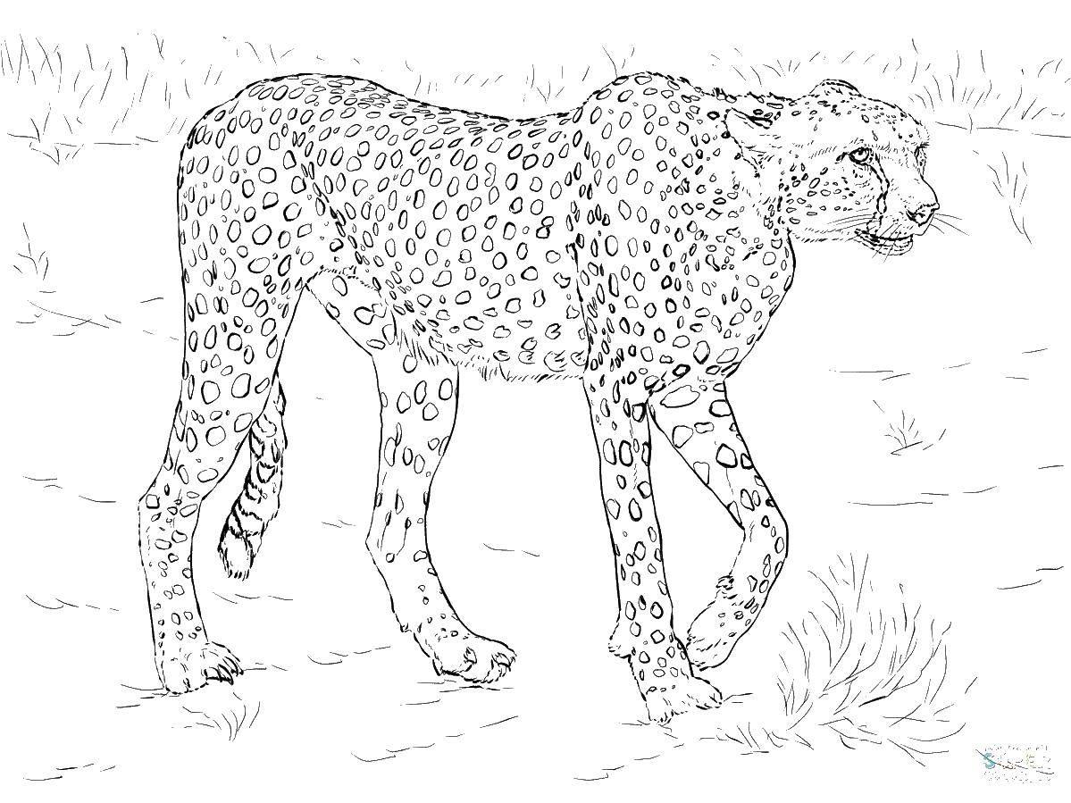 Картинки для распечатки диких животных