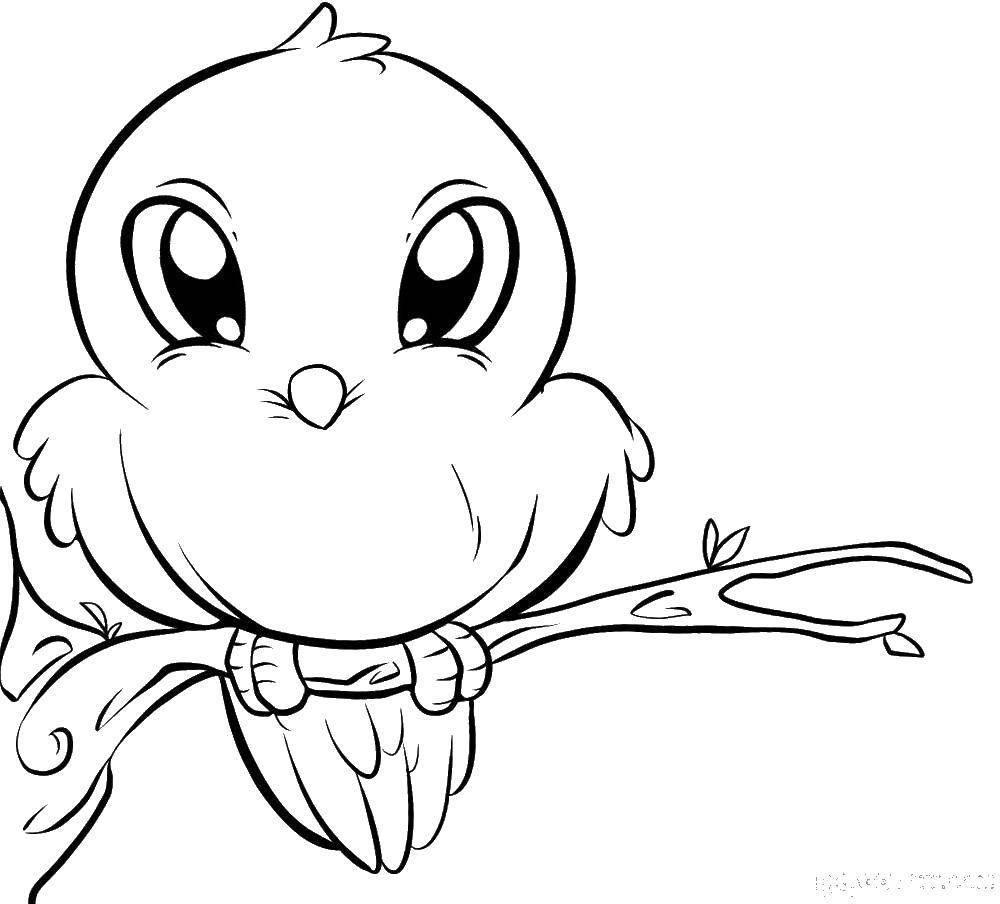 фишка картинки птичек для раскраски выпускаете альбом, какая